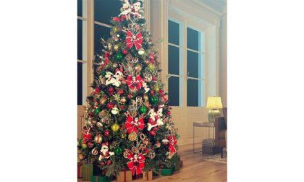 Como escolher sua árvore de Natal