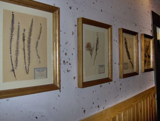 Lambri em madeira Pinus no projeto de Celina Mello Franco e Liliane Abreu na mostra Morar Mais 2007