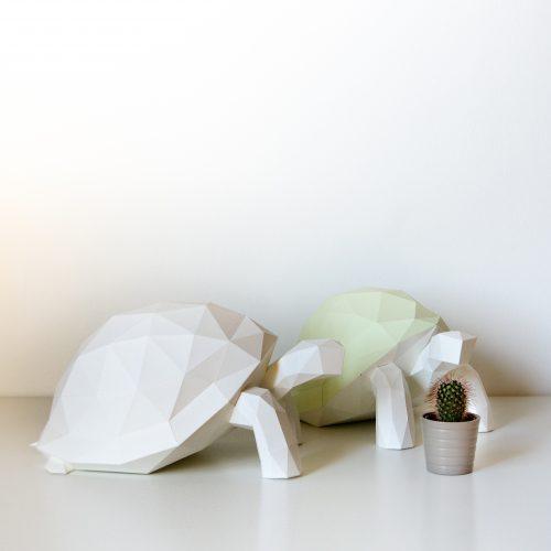 tortoise-04-dsc_0096_c