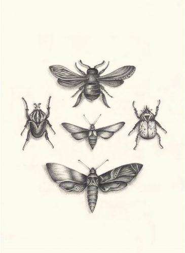 Metamorphosis quadra