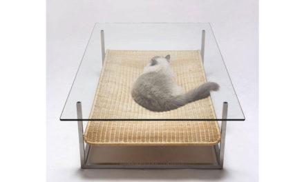 Cat Décor! Idéias de espaços e decoração para os gatos