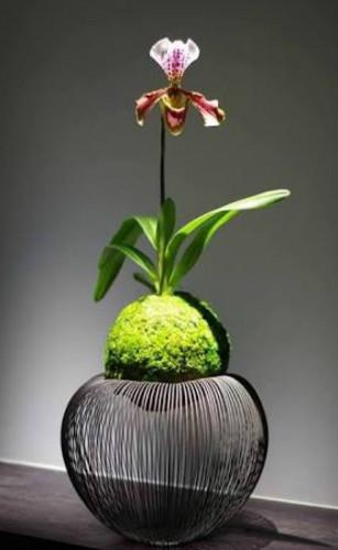 suporte de orquidea para kokedama