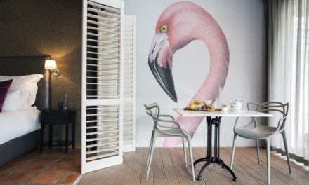 Flamingo mania!