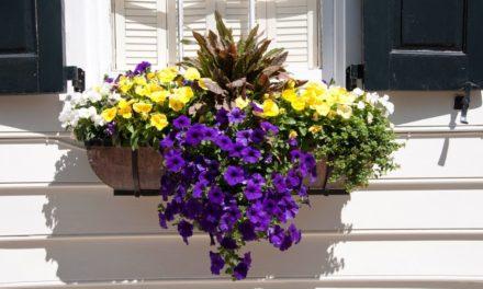 Floreiras e jardineiras trazem o verde para dentro de casa