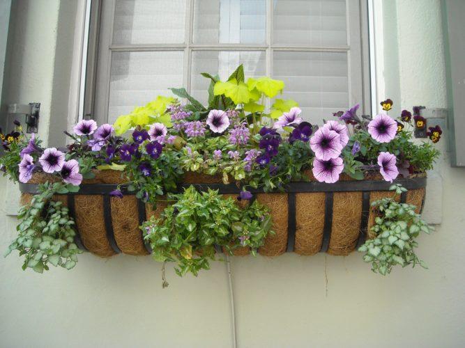 floreira na janela