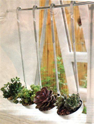 As fofas e queridas suculentas na decoração.Pode bossa maior ?! Simples conchas de cozinha viram um vasinho com muita originalidade e charme.