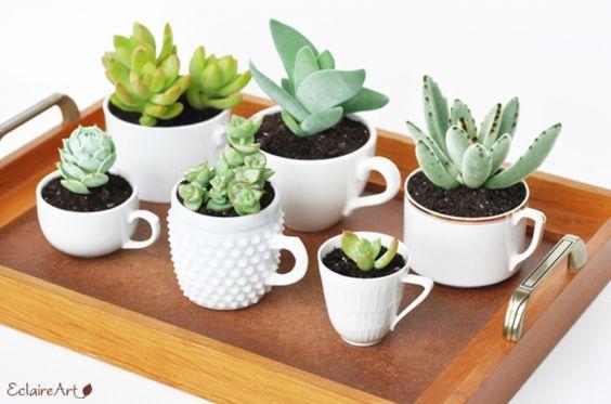 As fofas e queridas suculentas na decoração. Xicaras de todos os tamanhos para plantar sua coleção de suculentas.