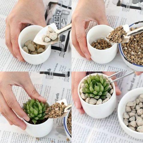 As fofas e queridas suculentas na decoração. Como plantar suculentas.