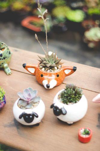 As fofas e queridas suculentas na decoração. As mini suculentas são um charme e muito fofas.