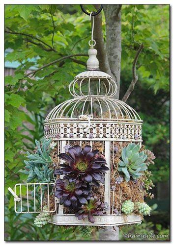 As queridas suculentas em um arranjo linda na gaiola.