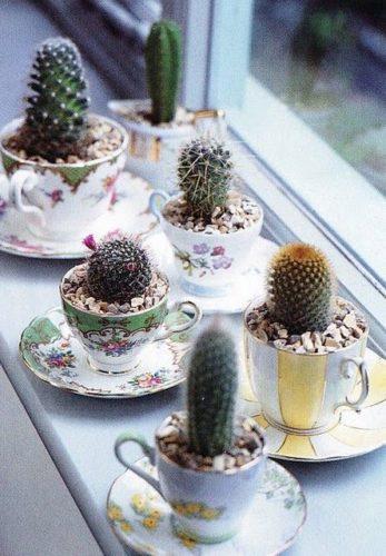 As fofas e queridas suculentas na decoração. Coleção de xícaras para colocar as suculentas.