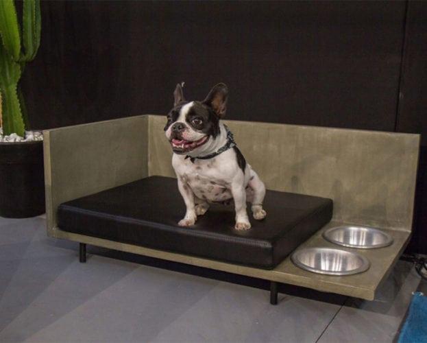 Dog Décor! Design para o seu cachorro