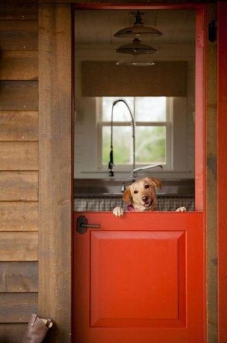 """A porta holandesa também é chamada de """"Dutch Door"""". Porta divida ao meio, praticidade para quem tem cachorro."""