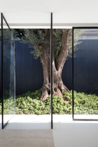 No espaço de João Armentano para a Casa Cor SP 2018, uma oliveira de 300 anos, trazida do Uruguai e inserida na Casacor por intermédio de guindaste – transborda, imponentemente, no ambiente.