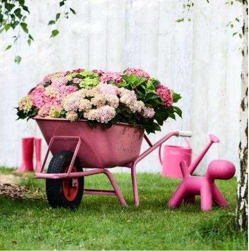 carrinho de mão com azaleias no jardim