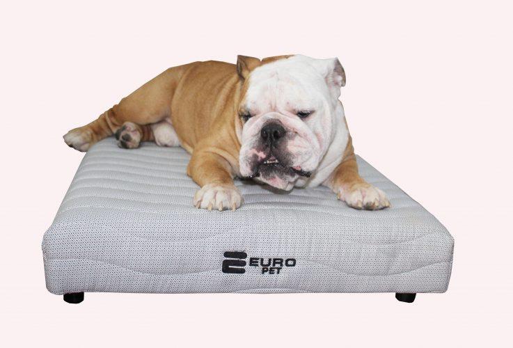 Cachorro deitado em cima do Euro Pet colchão