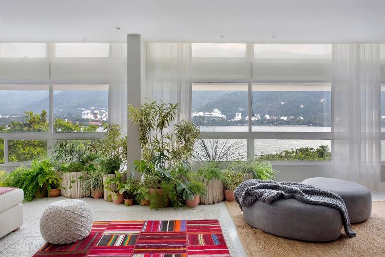 Plantas em vasos ao lado da janela de Anna Luiza Rothier
