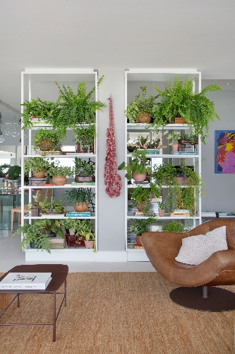 estantes com plantas assinado por Anna Luiza Rothier