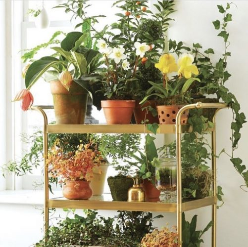 Decorando com os signos, a casa do geminiano. Carrinho de chá usado para coleção de vasos de flores.
