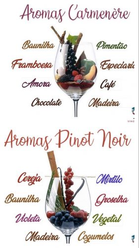 Recebendo com vinho. Terroir do vinho Pinot noir e Carmenére