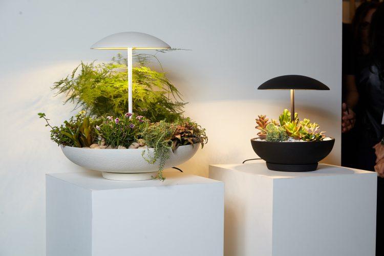 Luminária acoplada em um vaso de suculentas