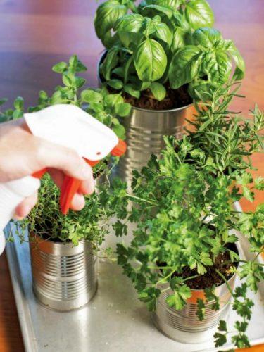 Transforme (parte da) sua sacada em uma horta. latas de aluminio com ervas plantadas