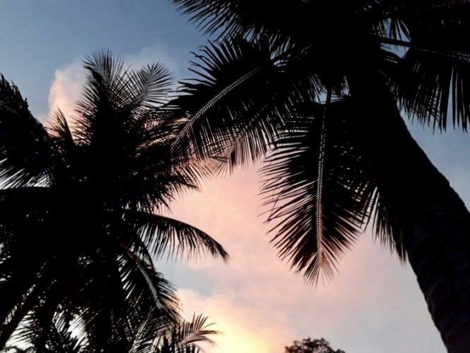 Foto tirada de baixo pra cima, pegando o topo de duas palmeiras e o çeu azul e rosa
