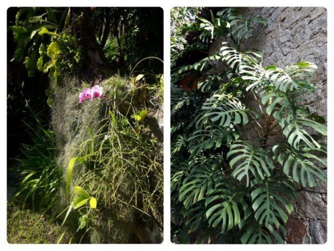 Foto de plantas folha de adão e orquideas