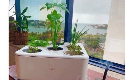 Primeira horta residencial inteligente do Brasil