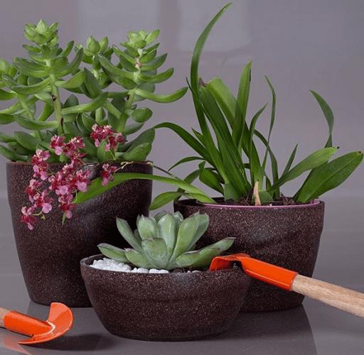 Vasos de flores reciclaveis na cor marrom com suculentas