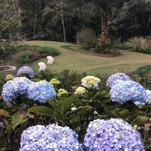 Canteiros cm flores hortencias na cor azul