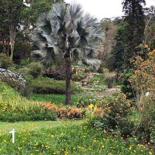 Jadins tropicias