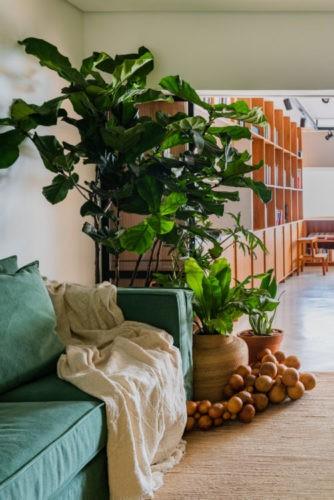 Novas formas de trabalhar, escritorio com cantinho verde. Com plantas e sofá