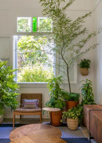 Cantinho da sala com varias plantas e arvore.