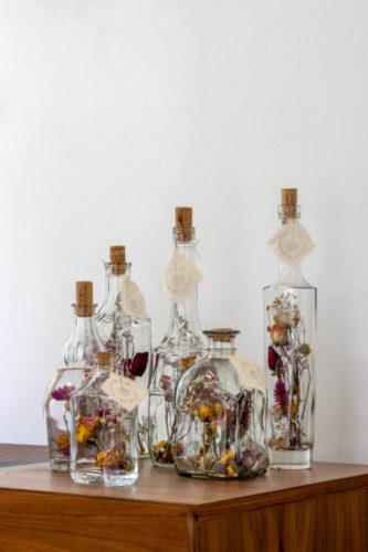 Garrafas de vidro com plantas dentro