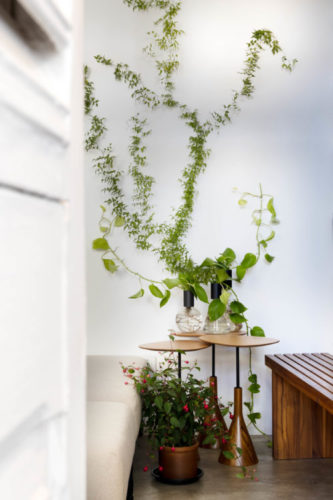 Parede com trepadeira, Atelier Botânico - loja carioca reabre com mostra de plantas e a participação de dez paisagistas e floristas