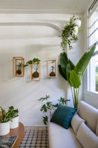 Kokedamas ( arranjo floral cm bola de musgo) dentro de caixas vazadas penduradas na parede, uma palmeira ao lado do sofá bege