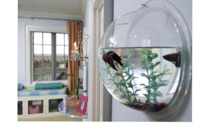 Um aquário pra chamar de seu
