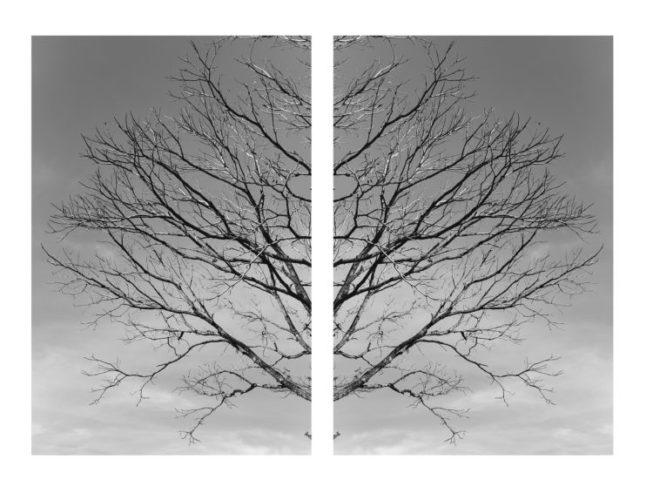 Exposição individual do fotógrafo Ari Kaye, duas fotografias, díptico em preto e branco, de uma arvore seca .