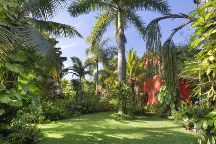 1400m2 de jardins exuberantes na Região dos Lagos no Rio. Gramado com uma grande palmeira e vegetação dos lados. Ao fundo a casa , com a fachada pintada de laranja