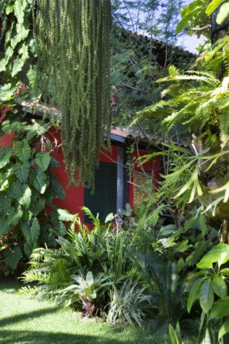 No meio de uma vegetação, ao fundo uma casa na região dos lagos.