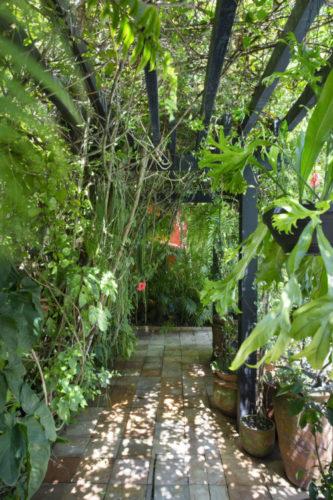 pergolado na cor verde, com trepadeiras e vegetação por todos os lados