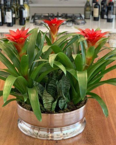 Cinco plantas práticas para adotar na decoração de casa, arranjo de bromélias.